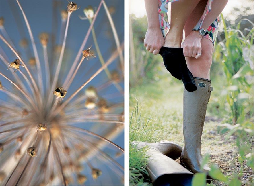 Jill Mead – The Virgin Gardener